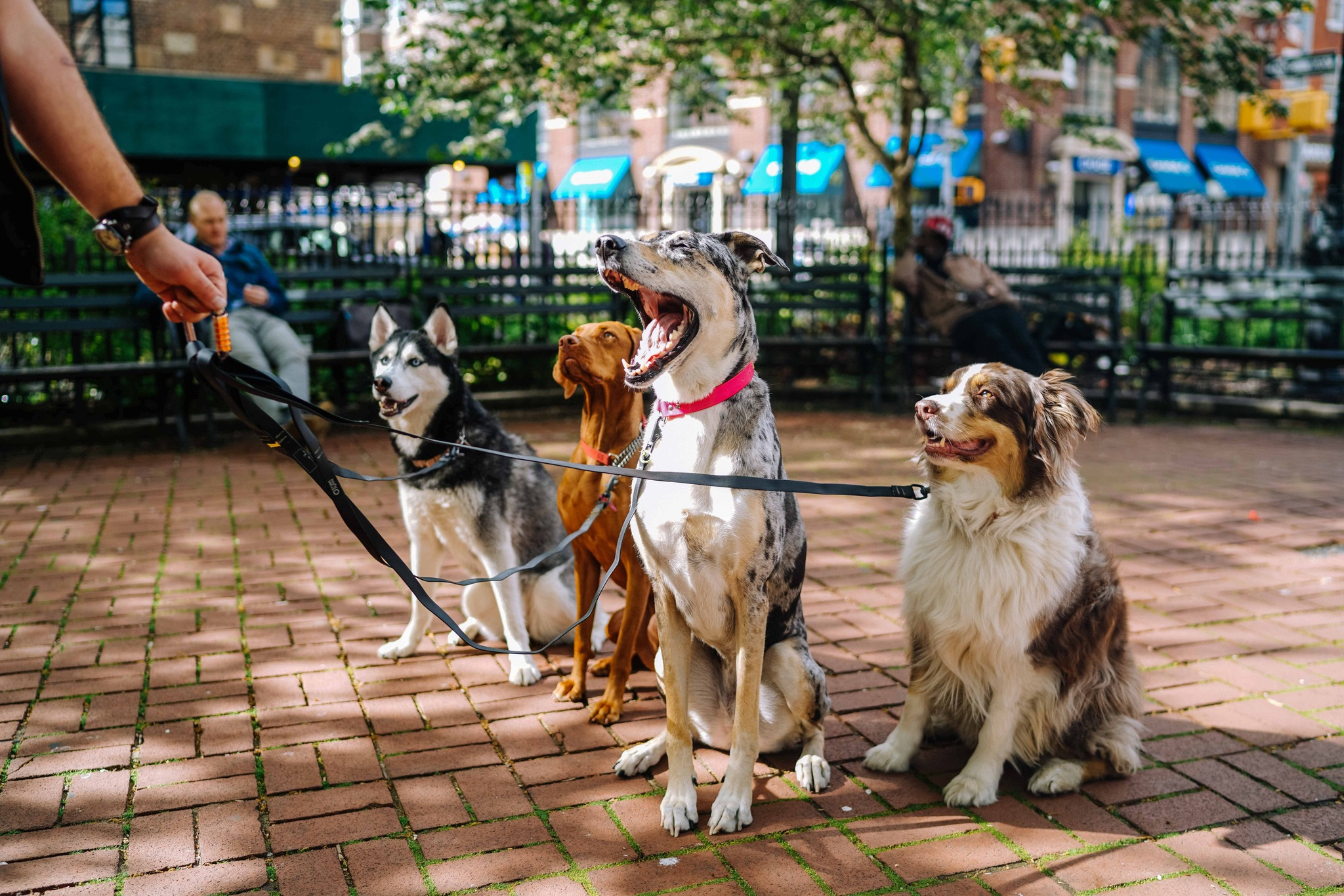 low stress jobs for anxiety including being a dog walker